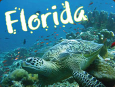 Poster for Florida educational travel tour with turtle swimming under the water surrounded by multiple fish
